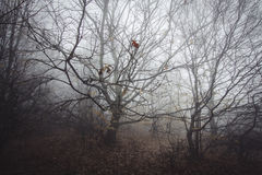 Branches in thick forest with fog Stock Photography