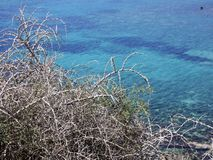 Thorny bushes and the turquoise sea. Branches of thorny bushes against the turquoise sea Stock Images