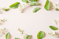 Branches with tiny white flowers. And green leaves on light wooden table. Fresh light spring background with copyspace Royalty Free Stock Photography