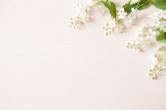Branches with tiny white flowers. And green leaves on light wooden table. Fresh light spring background with copyspace Royalty Free Stock Images