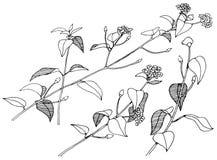Branches tirées par la main avec des fleurs Photographie stock libre de droits