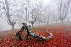 Branches tombées embrassant dans la forêt Photo libre de droits