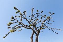 Branches towards blue sky Stock Photography
