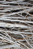 Branches of tree. A lot of cutted branches of tree in forest Royalty Free Stock Photos