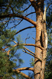 Branches of a tree. On a sunny day stock images