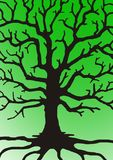 Branches of tree royalty free stock image