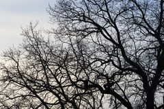 Branches of a tree against Stock Photography