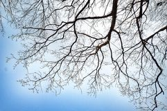 Branches of a tree against blue sky Royalty Free Stock Photo