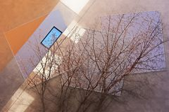 The branches of the tree against the building royalty free stock photo