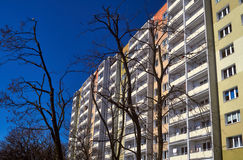 Branches of a tree against the facade of a modern residential building Royalty Free Stock Images