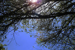 BRANCHES OF TREE AGAINST THE SKY Stock Photo