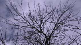 Branches of a tree against the sky. Wind shakes the branches of a tree against the background of moving clouds and flying birds stock video footage