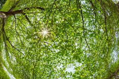 Branches of the tree against sunlight Stock Image