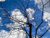 The branches of the tree. Bare tree branches against the blue sky. Branches of a leafless tree with leaves on a background of clouds. The branches of a dead stock images
