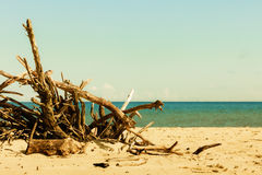Branches tree on beach Royalty Free Stock Photos