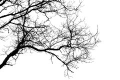 Branches of tree. Black colour branches of tree on white background Stock Images