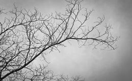The branches of tree Royalty Free Stock Photography
