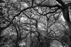 Branches of tree Stock Photos