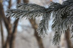 Branches of a tree of a Christmas royalty free stock photo