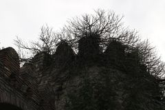 Branches of tree on the citadel royalty free stock photo