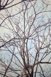Branches of tree Royalty Free Stock Photography