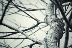 Branches of tree Royalty Free Stock Photo