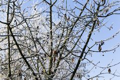 Branches of a tree covered with hoarfrost Royalty Free Stock Images