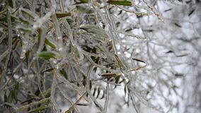 The branches of tree covered with ice. The branches of a tree covered with ice stock video footage