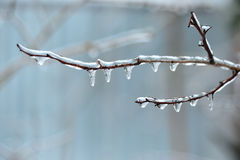 Branches of a tree covered with ice Stock Images