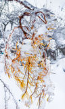 Branches of a tree covered with ice and snow. Royalty Free Stock Image
