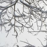 Branches of the tree are covered with ice. Winter season. Trees Stock Photography
