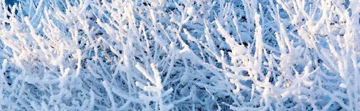 Branches tree with fluffy white snow and crystals of hoarfrost Stock Images