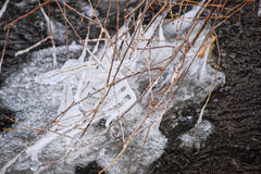 The branches of the tree are freezing in the winter river. They are covered with ice and frost Stock Photo