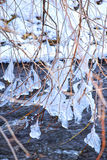 The branches of the tree are freezing. The branches of the tree are freezing in the winter river. They are covered with ice and frost Royalty Free Stock Photography