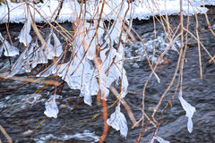 The branches of the tree are freezing in the winter river. They are covered with ice and frost Stock Images