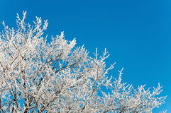 Branches of a tree in frost Royalty Free Stock Photos