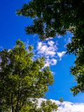Branches of a tree with green leaves against a blue sky with white clouds. Tree a blue sky royalty free stock image