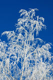 Branches of a tree in hoarfrost Stock Photography
