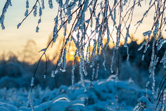 Branches of a tree in the ice. Branches of a tree in the ice in evening Stock Images