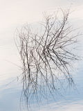 Branches of a tree in a lake at sunset Stock Image