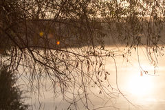 Branches of a tree in a lake at sunset Royalty Free Stock Images