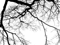 branches of a tree without leaves stock photo