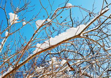 Branches with snow Stock Photos