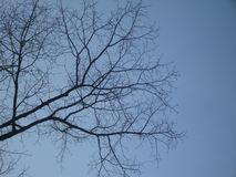 Branches of tree in spring on the blue sky background royalty free stock photography