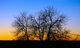 Branches of tree on sunset. Branches silhouette of tree on sunset in autumn Royalty Free Stock Photography