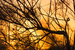 Branches of a tree at sunset Royalty Free Stock Images