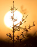 Branches of a tree at sunset Royalty Free Stock Image