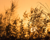 Branches of a tree at sunset Royalty Free Stock Photos