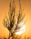 Branches of a tree at sunset Stock Image