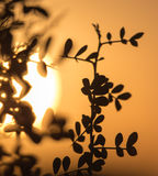 Branches of a tree at sunset Stock Images